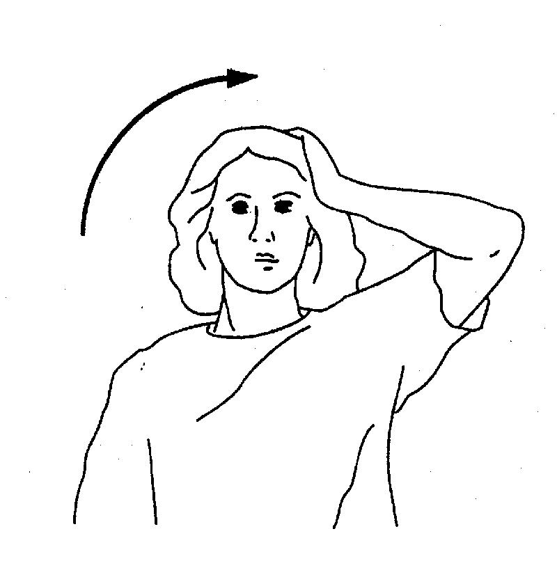 颈部结构图片分解图